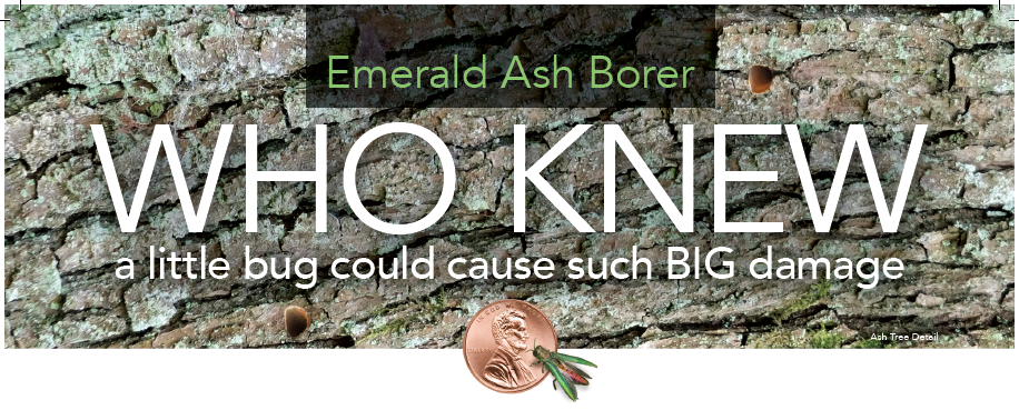 title for emerald ash borer page