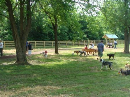 Dog Park Activity